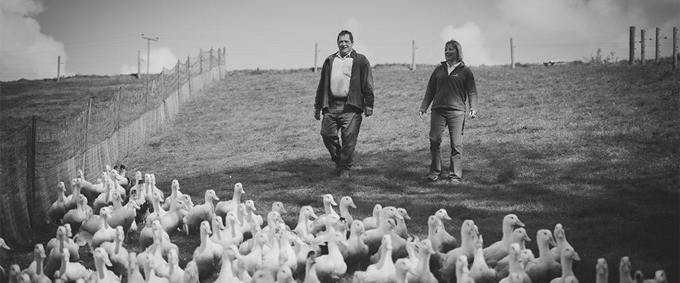 Cornish Duck Co Ltd
